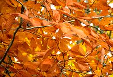 Baum der Orange Lizenzfreie Stockfotografie
