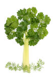 Baum der Petersilie und des Selleries Lizenzfreies Stockfoto