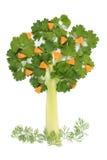 Baum der Petersilie und des Selleries Stockbilder