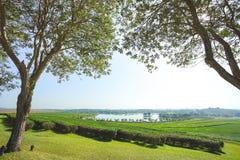 Baum der schönen Ansicht und Teeplantage mit See Stockbilder