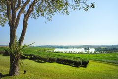 Baum der schönen Ansicht und Teeplantage mit See Lizenzfreie Stockbilder