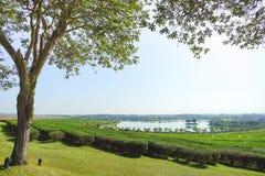 Baum der schönen Ansicht und Teeplantage mit See Lizenzfreies Stockfoto