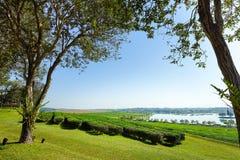 Baum der schönen Ansicht und Teeplantage mit See Lizenzfreie Stockfotos