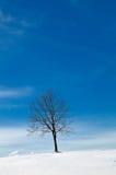 Baum in der schneebedeckten Winterlandschaft Stockfotografie