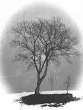 Baum in der schneebedeckten Winterlandschaft Stockfoto