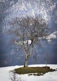 Baum in der schneebedeckten Winterlandschaft stockbilder