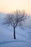 Baum in der schneebedeckten Winterlandschaft Lizenzfreie Stockfotografie