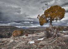 Baum in der schwarzen Schlucht des Gunnison, Co stockbild