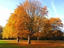 Baum, der seine Blätter verliert Lizenzfreies Stockfoto
