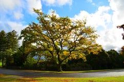 Baum, der sich im Sonnenlicht aalt Lizenzfreie Stockfotografie