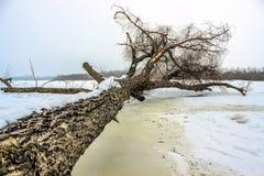 Baum, der sich im Winter hinlegt Lizenzfreie Stockbilder