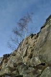 Baum der silbernen Birke durch Froggatt Edge Lizenzfreies Stockfoto