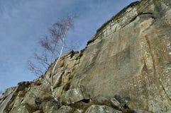 Baum der silbernen Birke durch Froggatt Edge Lizenzfreie Stockfotos