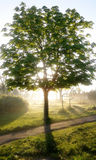 Baum in der Sonne Stockbild