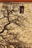 Baum in der Stadt - Baumaste agains alte Backsteinmauer Lizenzfreie Stockfotografie