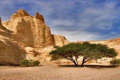 Baum an der Unterseite einer Schlucht Stockfotos