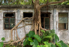 Baum, der verlassenes Gebäude in Hong Kong übernimmt Lizenzfreies Stockfoto