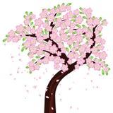 Baum in der vollen Blüte Stockfotos