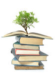 Baum, der vom Buch wächst Stockfotografie