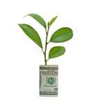 Baum, der vom Dollarschein wächst Lizenzfreie Stockfotografie