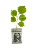 Baum, der vom Dollarschein wächst Lizenzfreie Stockfotos