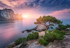 Baum, der vom Felsen bei Sonnenuntergang wächst Lizenzfreies Stockfoto