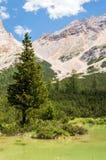 Baum, der vom See steigt Lizenzfreie Stockfotografie