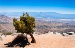 Baum in der Wüste Lizenzfreies Stockfoto