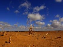 Baum in der Wüste Stockfotografie