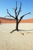 Baum in der Wüste - Deadvlei Lizenzfreies Stockfoto