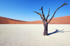 Baum in der Wüste - Deadvlei Lizenzfreie Stockbilder