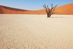 Baum in der Wüste - Deadvlei Stockbild