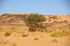 Baum in der Wüste, Libyen Lizenzfreie Stockbilder