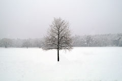 Baum in der weißen Winterlandschaft Stockfoto