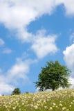 Baum in der Wiese Lizenzfreie Stockfotografie