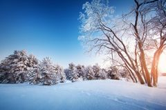 Baum in der Winter-Landschaft Stockfoto