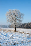 Baum in der Winterlandschaft stockfoto