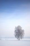 Baum in der winterlichen Landschaft Stockfotos
