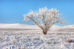 Baum in der Winterwüste Stockfotografie