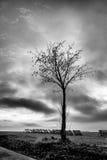 Baum in der Winterzeit Stockbild