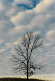 Baum, der Wolken wandert Lizenzfreie Stockbilder