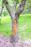 Baum des alten Mannes Lizenzfreie Stockfotografie