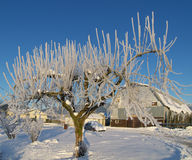 Baum des Eises stockfotografie