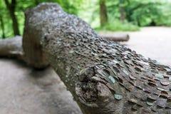 Baum des freien Geldes Stockfotografie