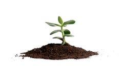 Baum des Geldes Lizenzfreies Stockbild