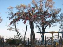 Baum des Glückes Lizenzfreies Stockfoto
