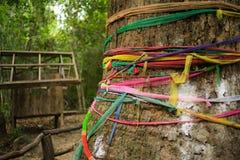 Baum des Glaubens Lizenzfreies Stockfoto