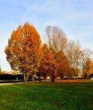 Baum des Herbstes lizenzfreie stockbilder