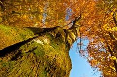 Baum des Herbstes Lizenzfreies Stockfoto