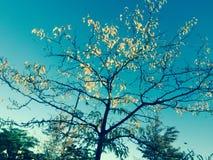 Baum des Lebens Lizenzfreies Stockbild
